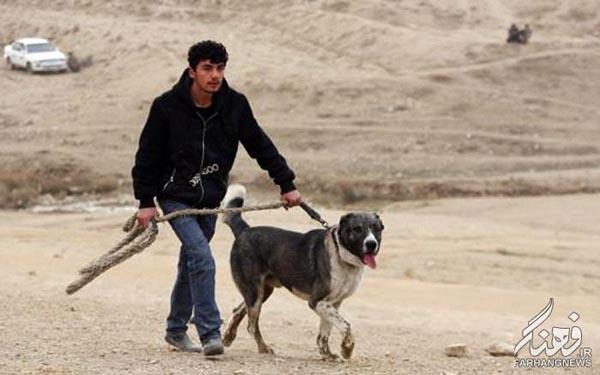سگ جنگی افغانستان (2)