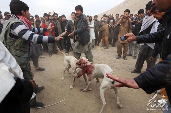 سگ جنگی افغانستان (5)
