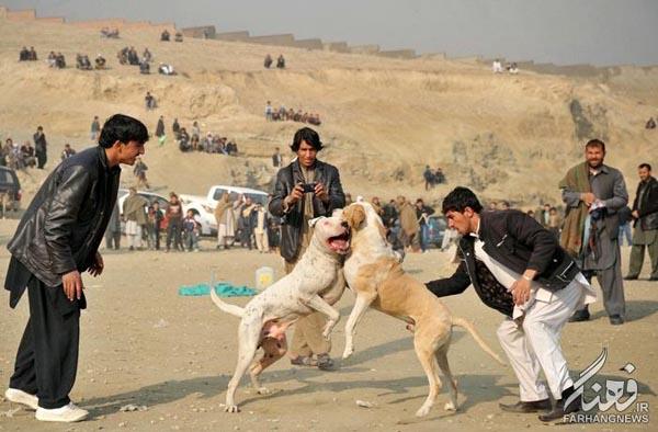 سگ جنگی افغانستان (8)