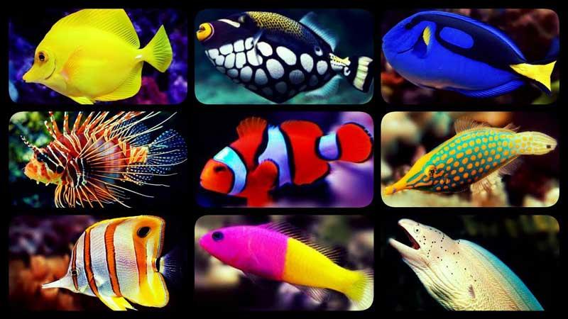 ماهی های دریا