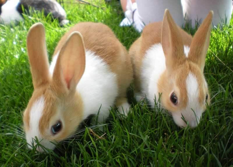 پرورش خرگوش در خانه
