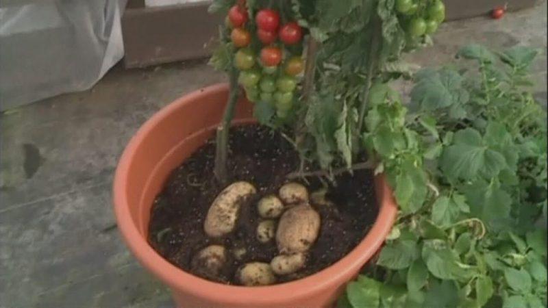 پرورش گیاه در خانه