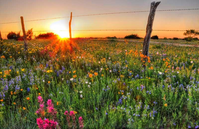 کشور گل ها