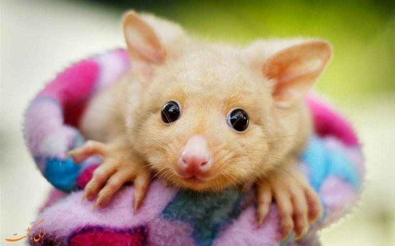 با مزه ترین حیوانات دنیا