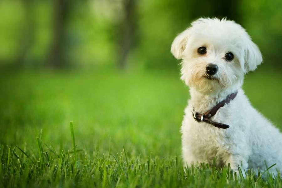 نجاست سگ در قرآن