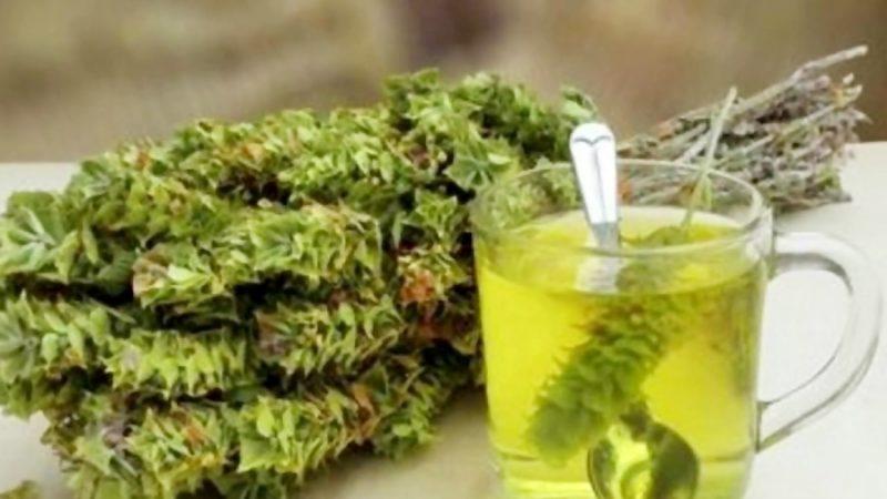 چای کوهی و خواص و نحوه مصرف آن
