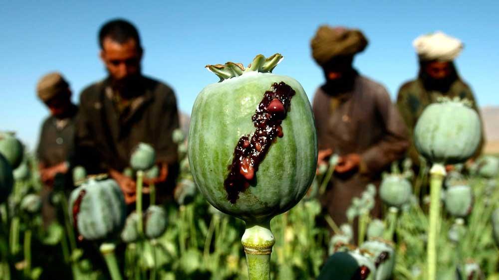 قیمت تریاک در افغانستان