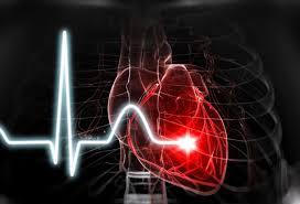 عملکرد قلب انسان