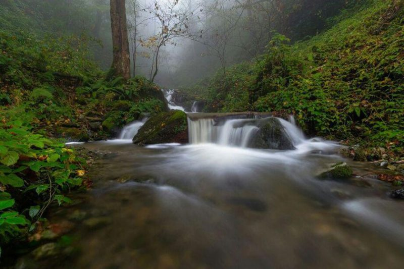جنگل دالخانی دالان بهشت
