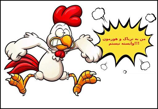مرغ های هورمونی