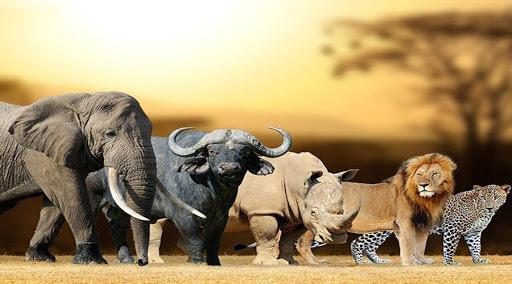 مرگبار ترین و کشنده ترین حیوانات روی زمین